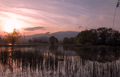 L'tang s'endort (Valentin le luron) Tags: sunset nature switzerland eau arbres yves paysage roseaux tang vaud plaine romandie chavornay paudex delorbe