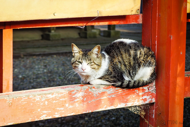 Today's Cat@2015-05-16