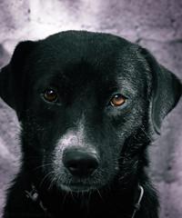 Set me free  -  John 8:36 (roizroiz) Tags: pets dogs animals puppy interestingness eyes adorable blackdog today cutedoggy animalportrait dogportrait flickrdogs i500 littledoglaughedstories blackandwhitebnwmonochromemonoartflickrbwbnwsocietybwloverbwphotoofthedaybwflickrgoodbwsocietybwcrewbwwednesdayinstapickbwbwstylesgfiroxbwigersbnwbwstyleofthedaymonotonemonochromaticnoirfineartphotobw
