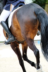 IMG_0663 (dreiwn) Tags: horse pony pferde pferd equestrian horseback reiten horseriding dressage hänger 2015 reitturnier dressur pferdekopf dressuur junioren ridingarena pferdesport doublebridle reitplatz reitverein pferdehänger kandare turnierreiten dressurprüfung ldressur