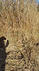 me & my shadow (Noddy Blue) Tags: boner selfie shadow