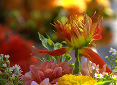 Bouquet & Bokeh (swong95765) Tags: pretty colorful flowers bouquet bokeh beautiful lovely eye candy autumn plant flower bright