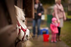 Fehmarn - Tag 4 - Nataschas Perspektive (O.I.S.) Tags: fehmarn 2016 herbst pony horse pferd stall stable farm bauernhof dof