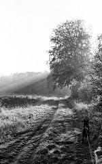 (salparadise666) Tags: moskva 2 industar 23 ilford fp4 caffenol rs nils volkmer calenberger land hannover niedersachsen germany landscape morning light bw black white monocchrome