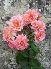 Bouquet de roses (frecari) Tags: roses printemps 2016 spring nature fleurs flowers pink