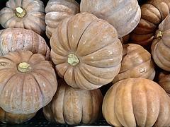 (RenateEurope) Tags: krbisse autumn herbst organic regional multicolor food iphoneography 2016 renateeurope stilllife yahoo:yourpictures=pumpkins