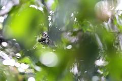 La jungle !! (delphine.cury) Tags: lierre jungle bokeh hederahelix
