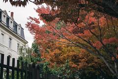 _DSC4104 (ALX-PHOTOGRAPHIE) Tags: automne autumn evening soir soire angers france arbres feuilles leaves