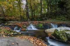 DSC_0839-30.jpg (TinaKav) Tags: autumn nikon ireland water land outdoor 2016 rocks cloghleagh scenery outside nikond7100 scenic moss leaves landscape flowingriver saveearth