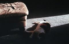 (jonesrachel920) Tags: july 4th 35mm negative scan film cat sunlight