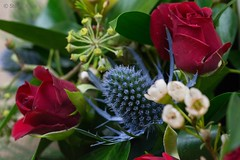 Thistle and roses (Stuart Jones - hope you like what you see.) Tags: red blue thistle rose petals prickles arrangement flowers autumn macro