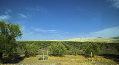 Young Olive trees (T   J ) Tags: morocco chefchaouen sefasawan fez teeje fujifilm xt1 fujinon1024mmf4