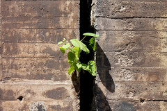 Nature Comes Back (danieloss86) Tags: nature natur industrie industrial duisburg landschaftsparknord beton concrete green