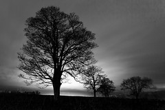 Corbridge (ca2cal) Tags: england northumberland corbridge hexham tree silhouette sky skyscape night tripod longexposure bw blackandwhite light shadow cloud black white mono monotone website project366