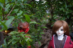 Ripe Pomegranate! (Smayocat) Tags: nine9style luts kiddelf darae