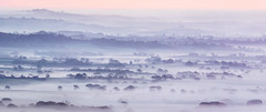 Marshwood Mists (Tony Gill) Tags: marshwoodvale dorset mist fog layers trees landscape