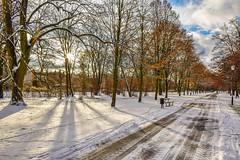 _DSC0611 (Marco Sky) Tags: snow park poniatowskiego nikon d5300 lodz poland winter day sun shadows road ice
