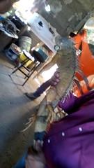 IMG_20151209_144955 (estradelirius) Tags: iguana garrobo