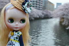 Cold day and cherry blossoms 8