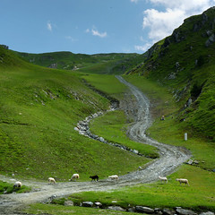 Counting sheep is popularly said to be an aid to sleep (Bn) Tags: road park blue summer sky panorama m