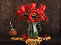 The Knights (panga_ua) Tags: light stilllife art floral composition canon dark spectacular lights petals artwork shadows artistic lace availablelight napkin ukraine poetic best creation gourd memory imagination natalie heroes mate floralarrangement reds chiaroscuro arrangement doily tabletop acorns bodegon redflowers bombilla naturemorte panga artisticphotography rivne naturamorta yerbamate artphotography sharpfocus glasspitcher floralstilllife theknights oaknuts woodentabletop  nataliepanga pastelsbackground yellowdoily matecalabazagourd matecalabazawithmetalmouth