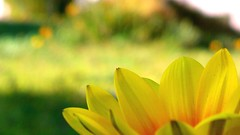 "lovely colorful leafs "") (Simply Amazing 770) Tags: flowers flower macro green yellow gardens garden nokia colorful shot bokeh edited great micro simple pixels leafs 41 mega 808 pureview"