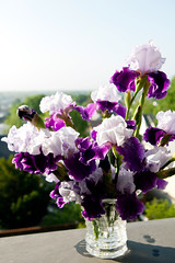 A vase full of my irises from the backyard (thewanderingeater) Tags: new york city flowers athome irises flowersfrommygarden