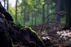 Heimatliche Natur (Margot in Love) Tags: nature forest wooden darkness natur holz wald heimat homeland dunkelheit 2013 pentaxk5