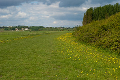 Field of Flowers (willumhg) Tags: uk bridge sea england wales river sony tide estuary severn a200