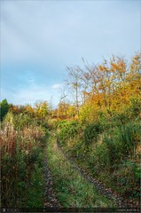 An Autumn Evening (bbusschots) Tags: autumn ireland evening cavan pathway photomatix tonemapped forestwood topazadjust