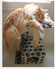 Yoga Schlafposition für Katzen - yoga sleep position for cats