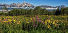 Wildflower Bonanza (Jeff Clow) Tags: flowers summer nature landscape natural wildflowers tetons grandtetonnationalpark jacksonholewyoming ©jeffrclow dcpt dirtcheapphototours jeffclowphototour