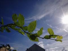 Autumn sun #  (Victor_CChan) Tags: uk blue light shadow sky sun leaves flickr lancashire preston rays autumnsun 14mm mft