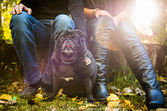 Pug Life (ErikMcR) Tags: dog engagement nikon couple pug lensflare flare d800 engagementshoot