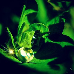 Light on waterdrop (zonnigerzon) Tags: waterdrop waterdruppel miniworld