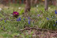 Frühling #2