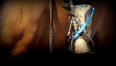 Patria... (Eduardo Amorim) Tags: horse southamerica argentina argentine criollo caballo cheval pferde cavallo cavalo gauchos pferd ayacucho pampa loro hest hevonen gaucho staffa  amricadosul loros stirrup hst gacho estribo  amriquedusud provinciadebuenosaires  recado gachos  sudamrica suramrica amricadelsur  sdamerika crioulo caballoscriollos criollos  pilchas  buenosairesprovince pilchasgauchas steigbgel recao pampaargentina americadelsud botadepotro  crioulos cavalocrioulo americameridionale caballocriollo eduardoamorim cavaloscrioulos estribera estrivo botadegarrodepotro trier pampaargentino