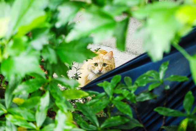 Today's Cat@2015-05-23