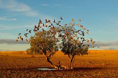 Beautiful place (raiditem) Tags: nature travel birds bluesky outside beautifulplace yellow