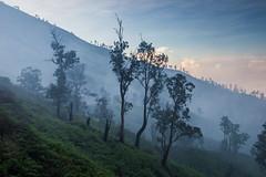 Misty sunrise en route to Kawah Ijen crater rim (Tim&Elisa) Tags: java kawahijen indonesia asia sunrise landscape morning misty clouds canon trees sun mountain volcano hill mist