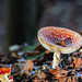 """2016_10_31_Champignons-75 • <a style=""""font-size:0.8em;"""" href=""""http://www.flickr.com/photos/100070713@N08/30062033444/"""" target=""""_blank"""">View on Flickr</a>"""
