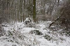 ckuchem-1652 (christine_kuchem) Tags: baumrinde buche bume eiche eis frost hainbuche natur pfad pflanzen ruhe samen spuren stille struktur wald weg wildpflanzen winter einsam kalt schnee ste