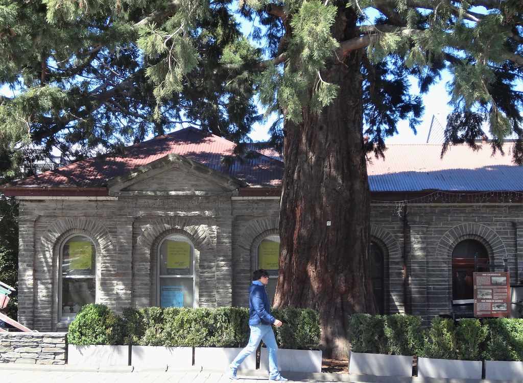 Queeenstown. The old courthouse erected in 1876 in local schist stone and shaded by old giant California Redwoods or Sequois.Opposite is the town library identical but erected in 1877.