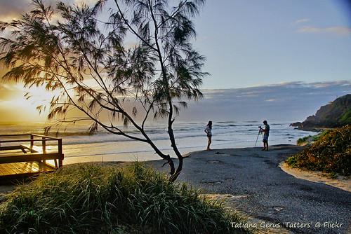 Gold Coast sunrise with sheoak