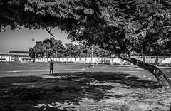 The Lonely Kite Flyer (arkamitralahiri) Tags: india indian outdoor shadow shade tree streetphotography person kite flying streetscene monochrome monotone blackandwhite panorama day sky rural cellphonephotography motorolag4plus nature