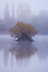 Herbst 2016 035 (Marcel Andr Briefs) Tags: baum deutschland edersee germany hessen insel nebel see teich teichmann fog morgens morning pond tree outdoor