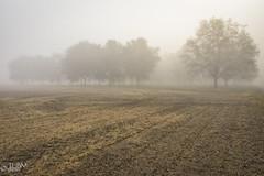 Pecan Grove (JLDMphoto) Tags: nikon d7200 14mm pecan grove ag agriculture fog field river bank tree trees outside outdoors kansas kaw
