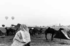 Scape of Pushkar camel fair ground,Rajasthan. (vjisin) Tags: pushkar rajasthan india iamnikon nikond3200 asia camel incredibleindia indianheritage travelphotography pushkarcamelfair herder monochrome blackandwhite inexplore outdoor sport animal riding indianman man camelherder silhouette