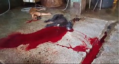 [Busan KAPCA] We need your support for the press conference urging appeal of Sangae-dong Dog Meat Market cruel slaughter case (Koreandogs) Tags:      dogmeat catmeat animalabuse southkorea boknal pyeongchang2018 imagineyourkorea hyundai samsung lg kia sk daewoo fila koreanairline asianaairline boycott ulsan