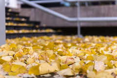 Leaves on a stair // Autumn in Amsterdam (Merlijn Hoek) Tags: leaves bladeren herfst autumn merlijnhoek merlijn hoek fotograaf fotografie photographer photography man autodidact amsterdammer nikon nikkor camera kamera full fullframe d810 nikond810 fullframedigitalslr digitalslr slr 35mmformat 36×24mm 35mm 36megapixel digitalsinglelensreflex straat street straatfotografie streetphotography